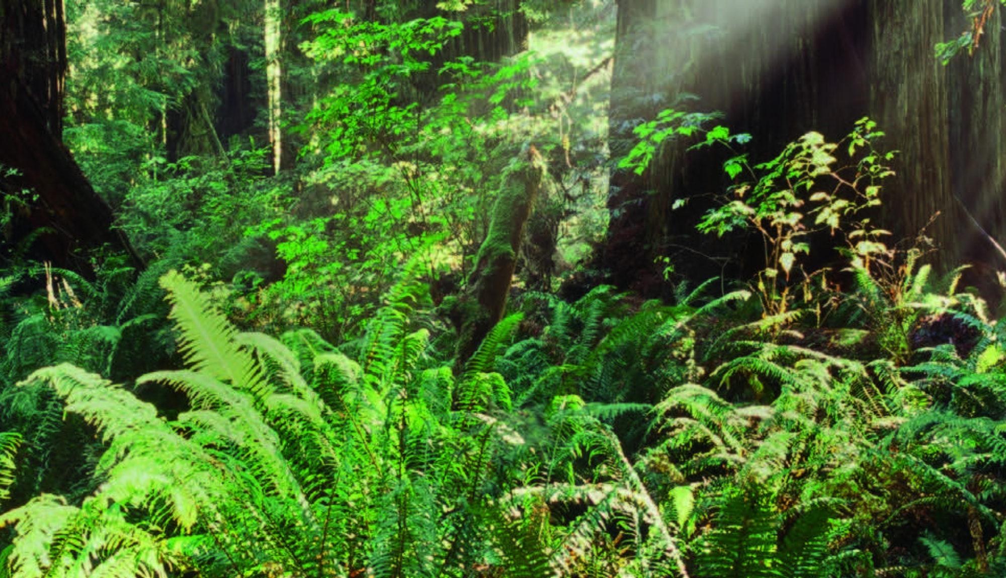 EE INFO Wald